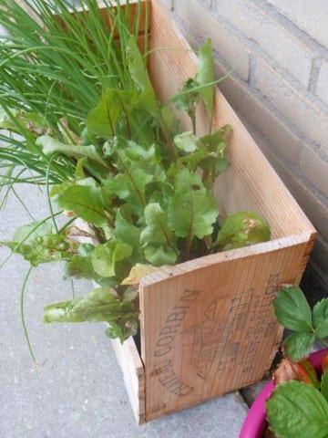 plantenbakken van wijnkistjes (Small)