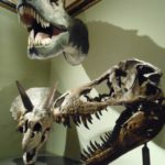 Wenen: Het Natuurhistorisch Museum
