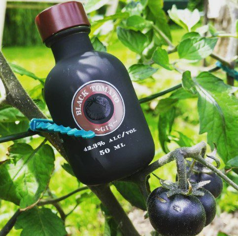 Black Tomato Gin & Tonic