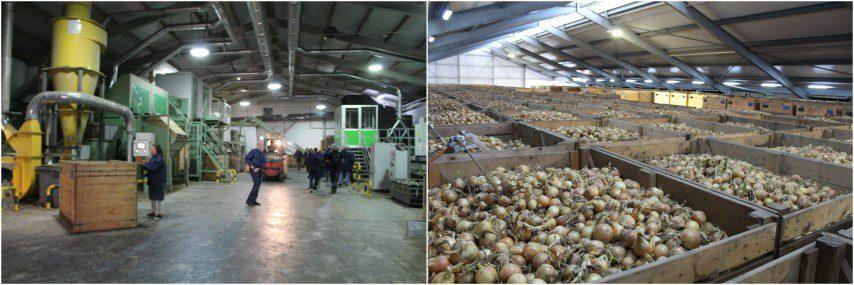 Wiskerke Onions