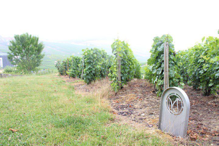 Een bruisend bezoek aan de Champagnestreek - Champagne Voirin-Jumel