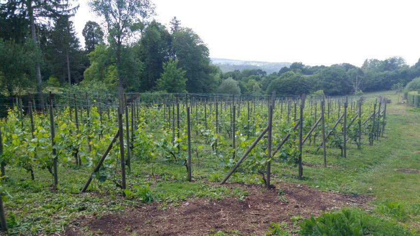 Wijntour door de provincie Luik - Domaine Septem Triones