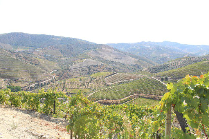 Quevedo Port - Douro Valley vineyards