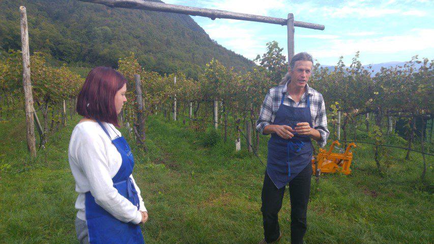 Tröpfltalhof Winery Zuid-Tirol