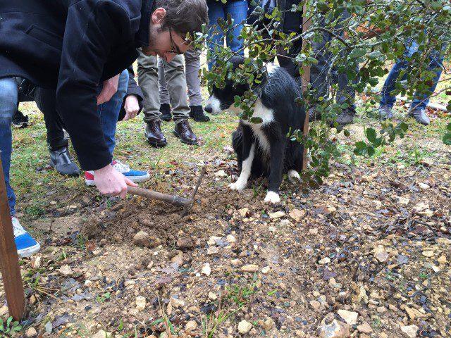 Truffels zoeken in de Dordogne