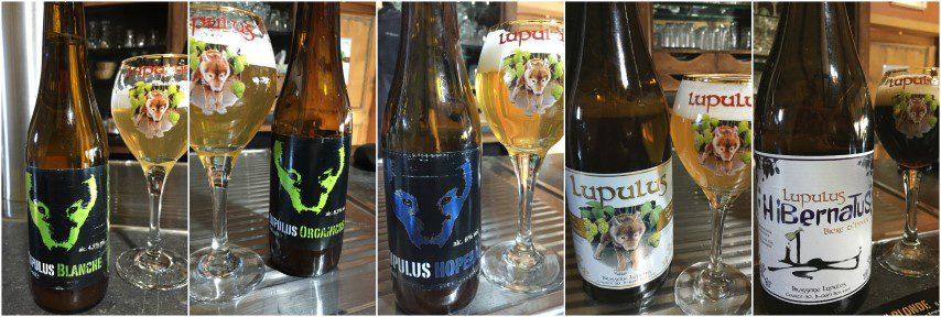 5 brouwerijen in Wallonië - Op bezoek bij: Brasserie Lupulus