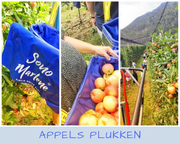 Marlene appels plukken