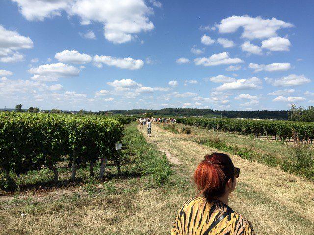 Vignes Vins Randos: wijnwandelen in de Loire