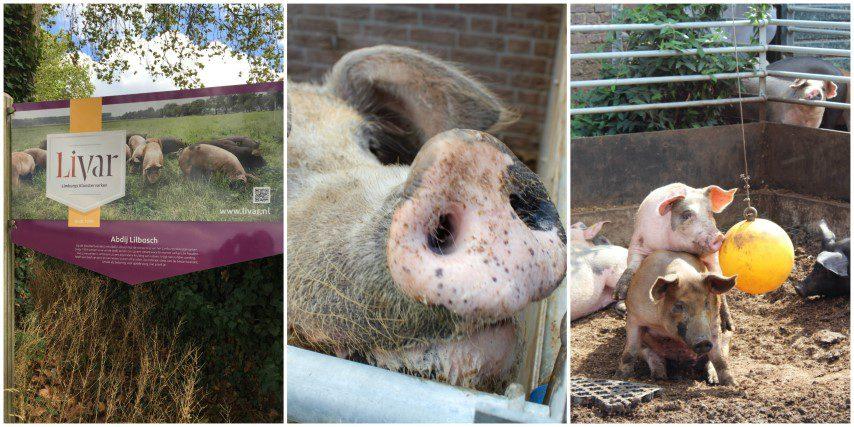 10 tips voor een culinair weekend Zuid-Limburg: Livar varkens