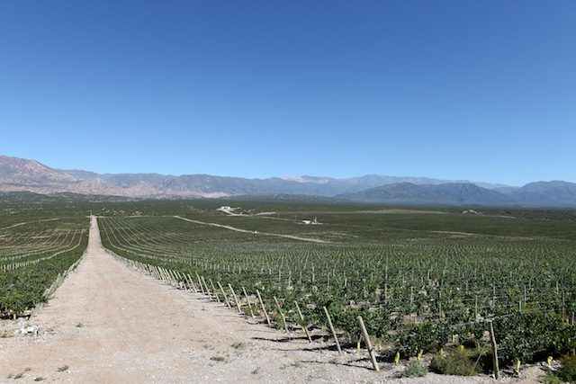 Bodegas Callia wijnen