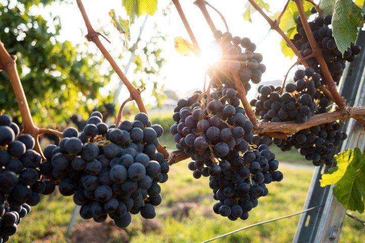 Wishlist - Een roadtrip maken door de Washington State wijngaarden