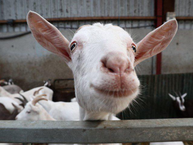 De smaken van Noord-Ierland - Broughgammon Farm