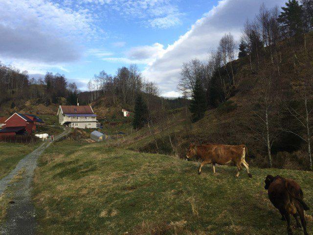 Wat te doen in Bergen Noorwegen - Osteriet i samnanger