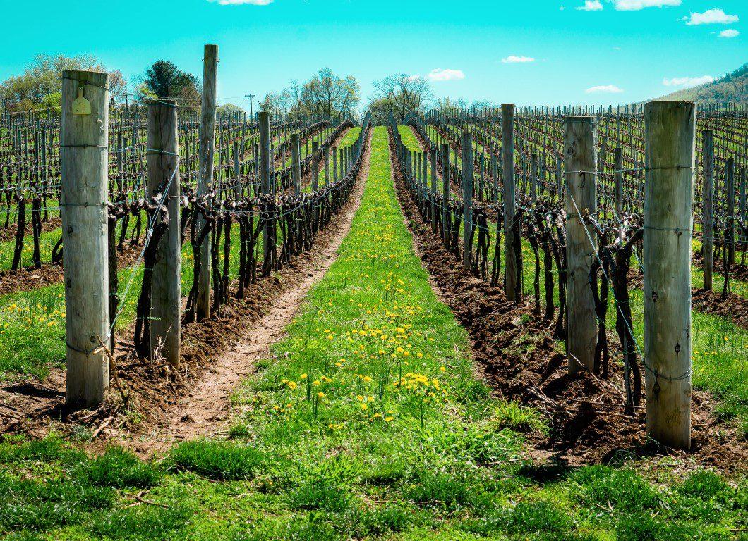 Nederlandse wijnen worden gevierd tijdens Amsterdam Wine Festival