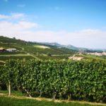 Barolo en Barbaresco - De parels van Piemonte