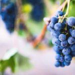 Wat is vegan wijn en vegetarische wijn?