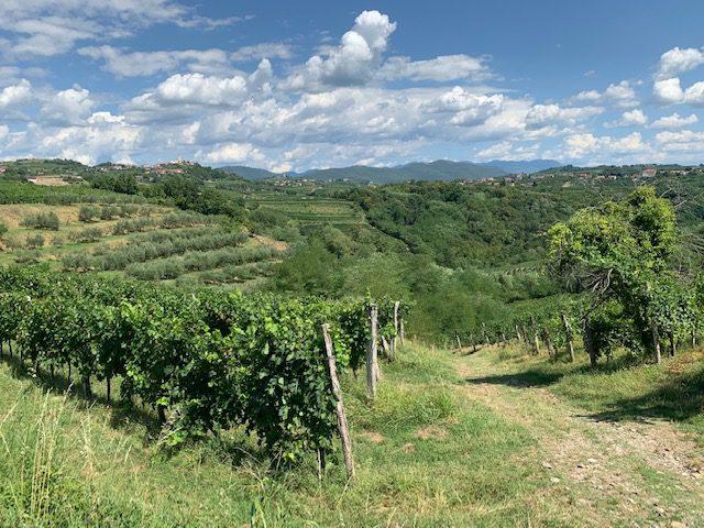 De Vipava Vallei in Slovenië, een prachtig wijngebied