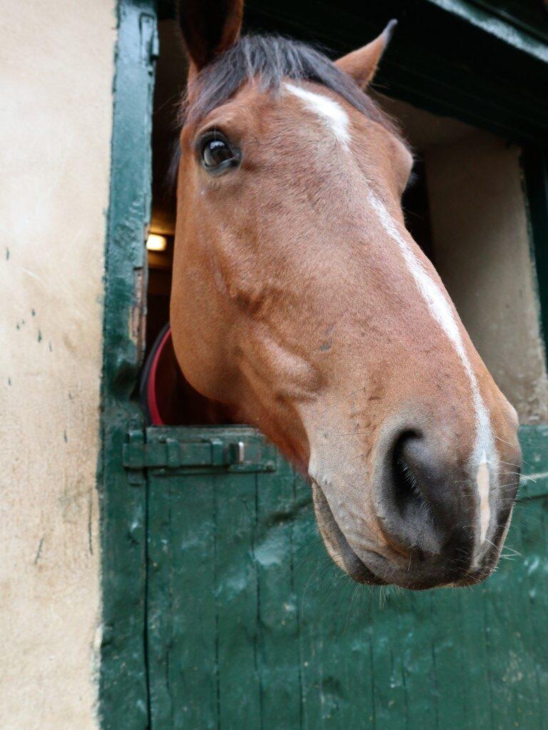 grieks paardje
