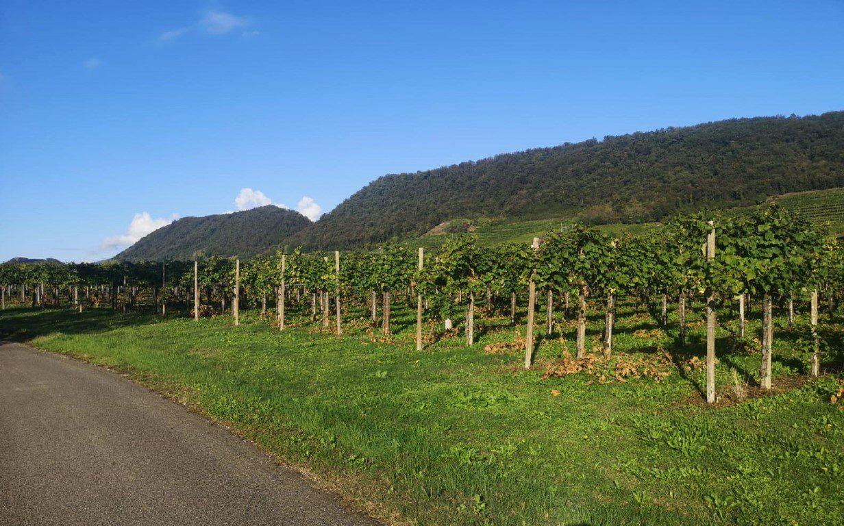 Soligo wijnvelden