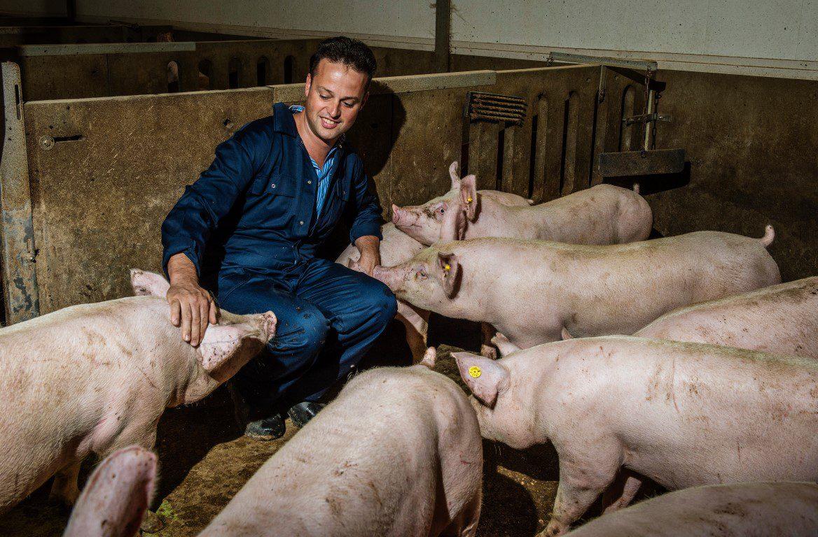 Ruyghveen varkensboeren